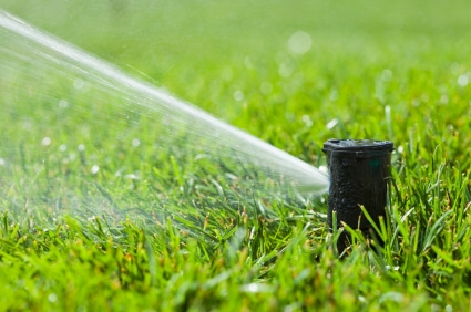 Irrigation sprinkler head that has been activated to water a lawn.