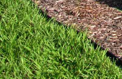 Example of Bahia grass in the lawn of a Lakeland, FL homeowner.
