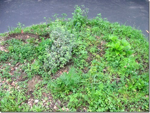 Weeds taking over a portion of a lawn.