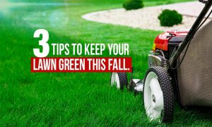 3 Easy Tips to Keep Your Lawn Green This Fall