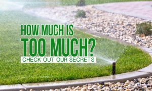 How Much Is Too Much Water For Your Lawn