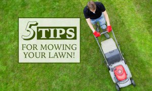 5 Professional Tips for Mowing Your Lawn