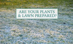 Are your plants and lawn prepared for Winter?