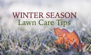 Show Your Lawn Some Love When the Winter Winds Come