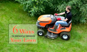 6 Ways to Instantly Improve Your Lawn