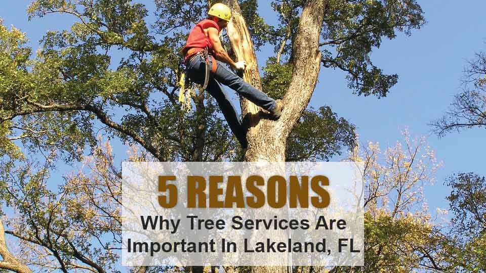 Only experienced professionals provide tree services at Creative Edge Landscape & Lawn Care LLC.