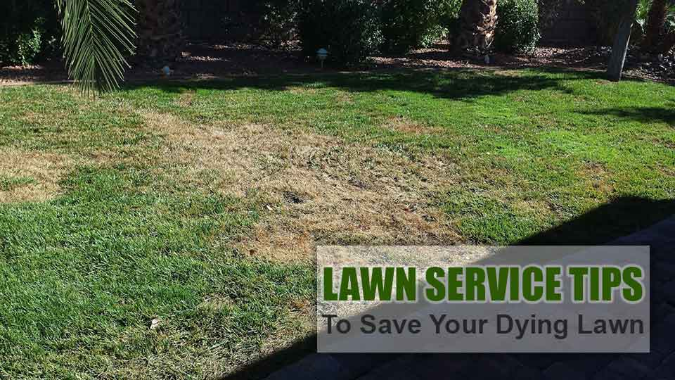 Unhealthy, dying lawn in Lakeland that is in need of revitalization.