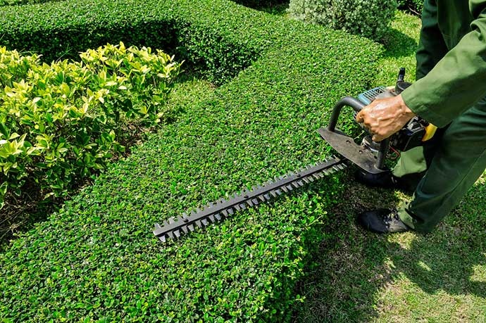 Hedge trimming is done using our professional hedge trimmers.