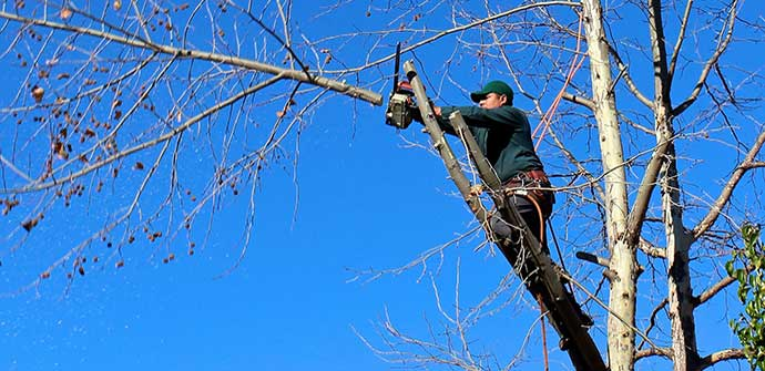 Creative Edge team member trimming a tree on a property in Lakeland, FL.