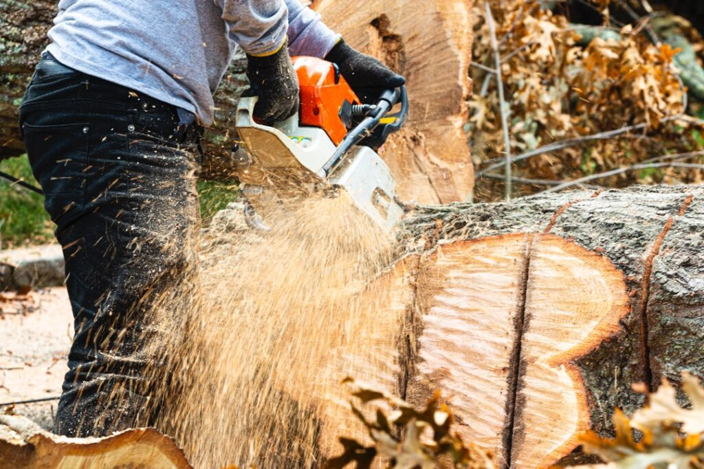 Professional tree removal service in Lakeland, Florida