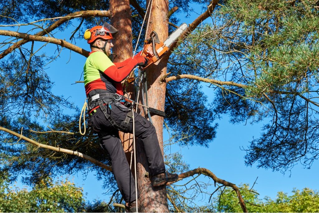 Tree pruning on a property in Lakeland, Florida