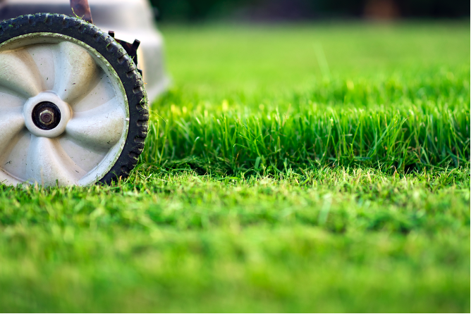 Professional lawn mowing company in Lakeland, Florida