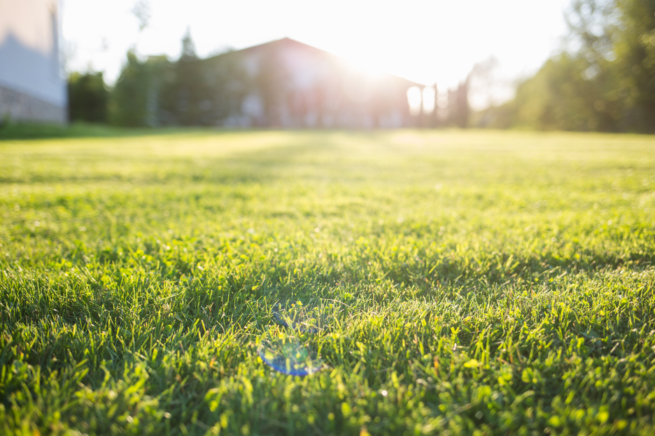 Residential lawn care company in Lakeland, Florida